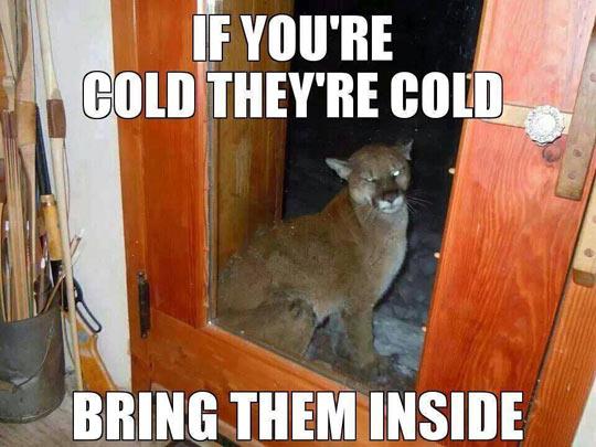 funny-puma-outside-cold
