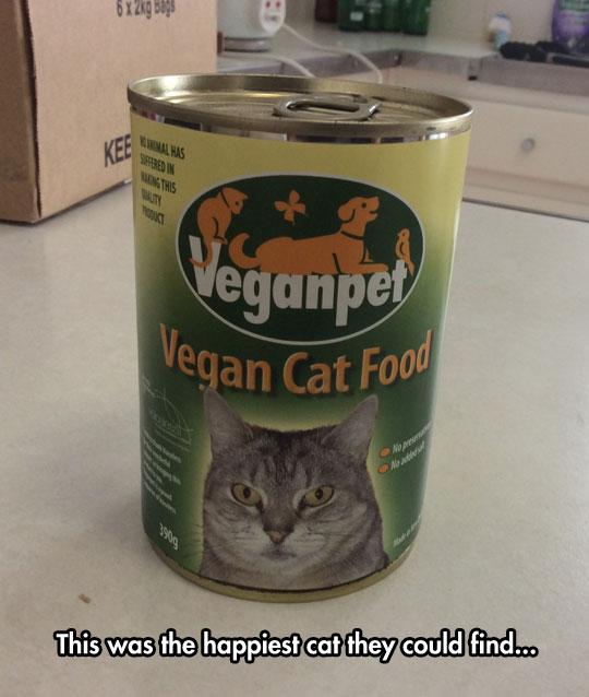 Cats' Reaction To Vegan Food