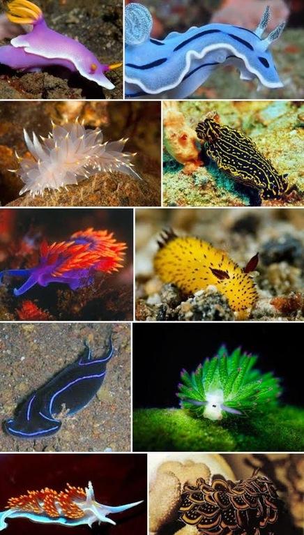 Sea slugs are nature on acid