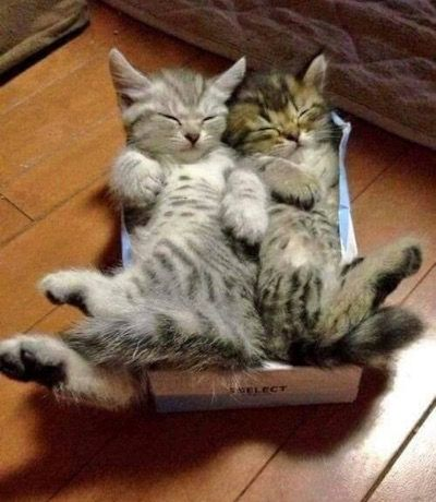 Sibling snuggles