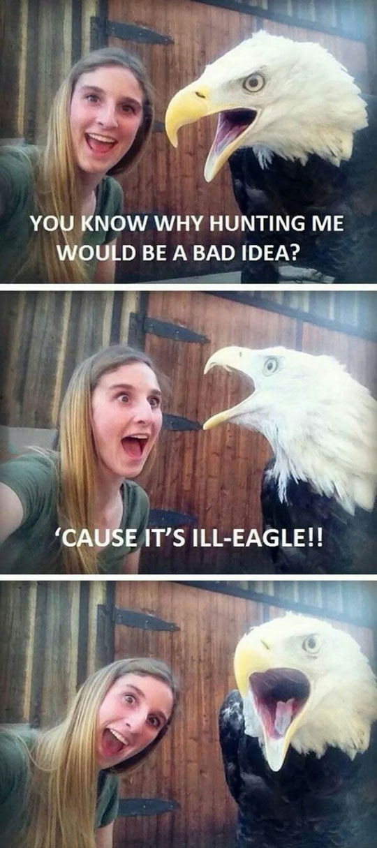 cool-Eagle-girl-zoo-illegal