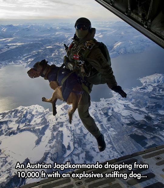 cool-airplane-jump-parachute-dog
