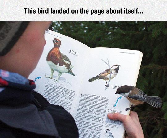 cool-bird-book-kid-drawing
