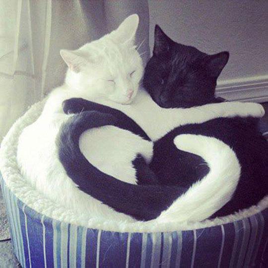Yin-Yang Of Love