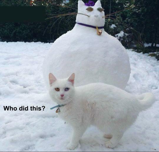 When Cat Feelings Get Hurt