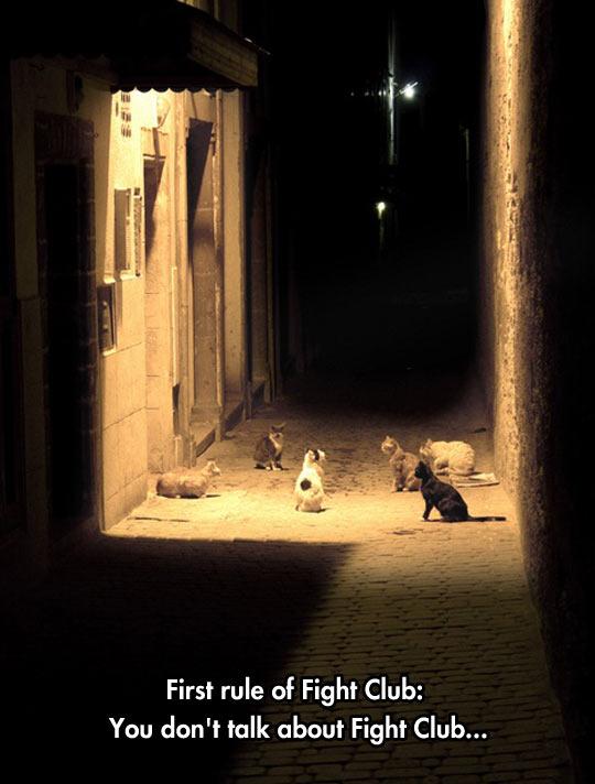 cool-cat-meeting-street-club