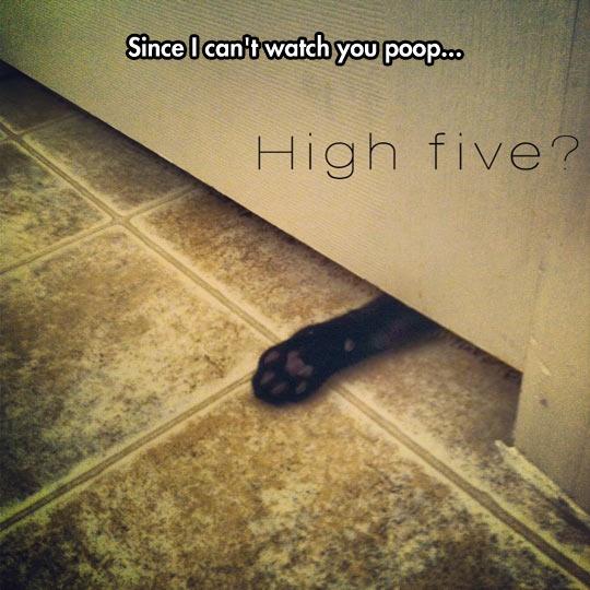 cool-cat-paw-door-high-five