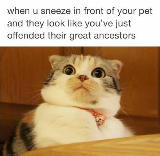 cool-cat-shocked-pet-sneeze