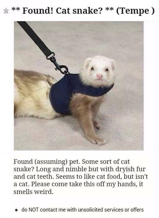 Perfect Description Of A Ferret