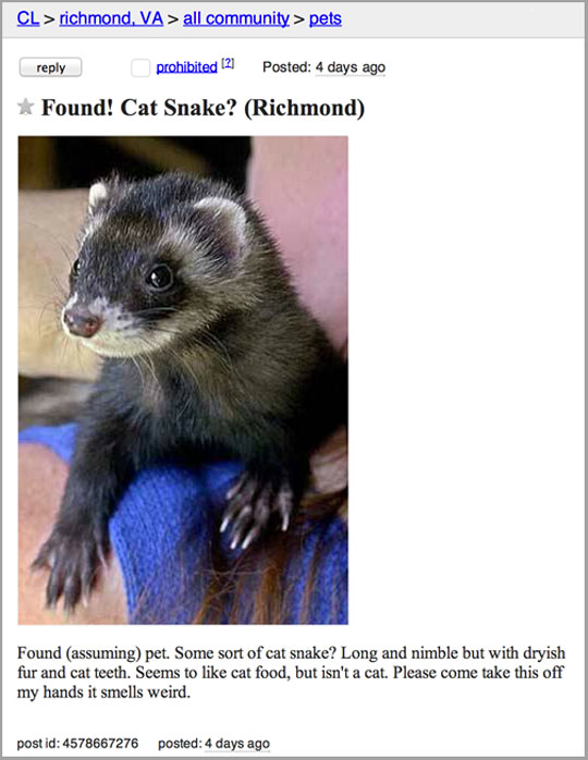 cool-cat-snake-found-animal