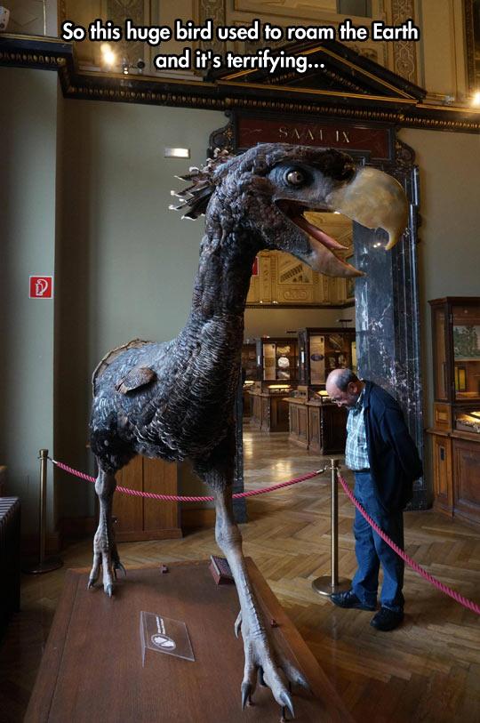 cool-dinosaur-bird-museum