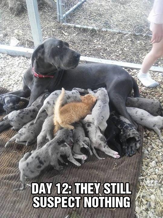 cool-dog-newborn-babies-cat