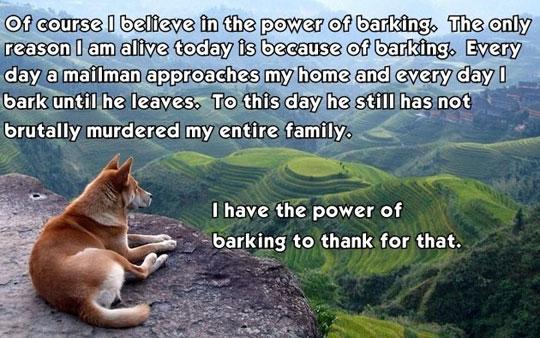 cool-dog-thinking-mountain-barking