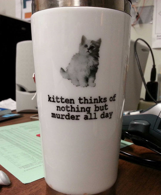 cool-kitten-mug-murder-think