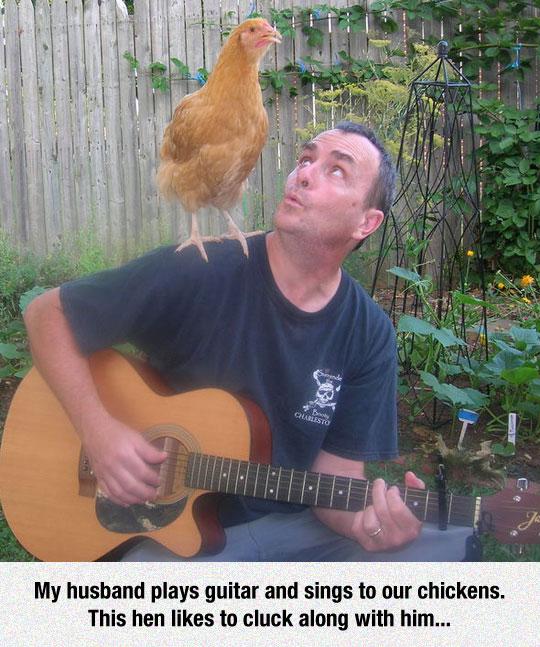 Chicken Pickin