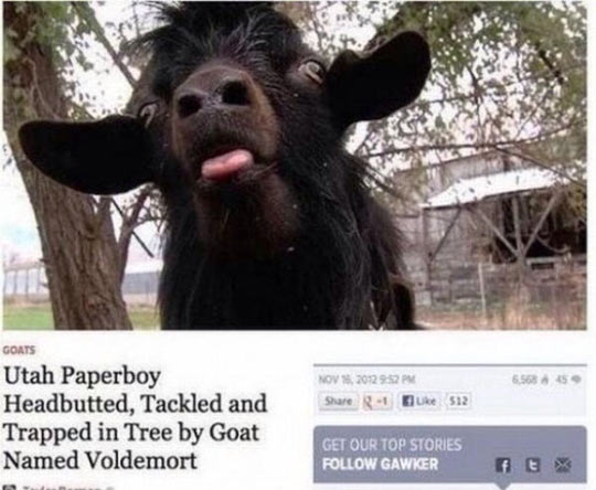 Quite Possibly The Best Headline Ever Written