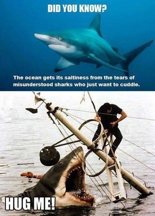 Oh, Poor Misunderstood Shark