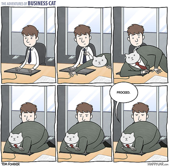 Business Cat Is At It Again