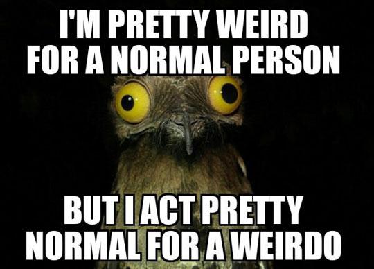 cool-owl-eyes-weird-normal-person