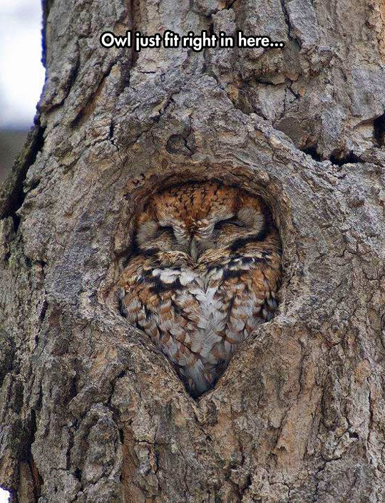 cool-owl-hole-fit-sleeping