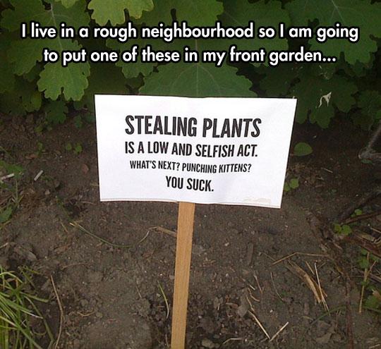 Sneaky Plant Thieves