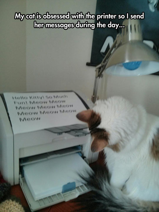 cool-printer-cat-message-office