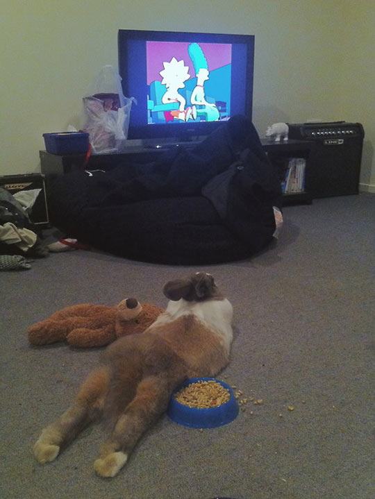 Watching His Favorite TV Show