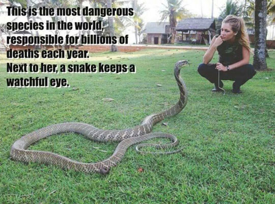 cool-snake-human-deadly-species