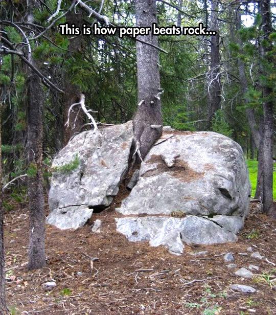 cool-tree-woods-rock-broken