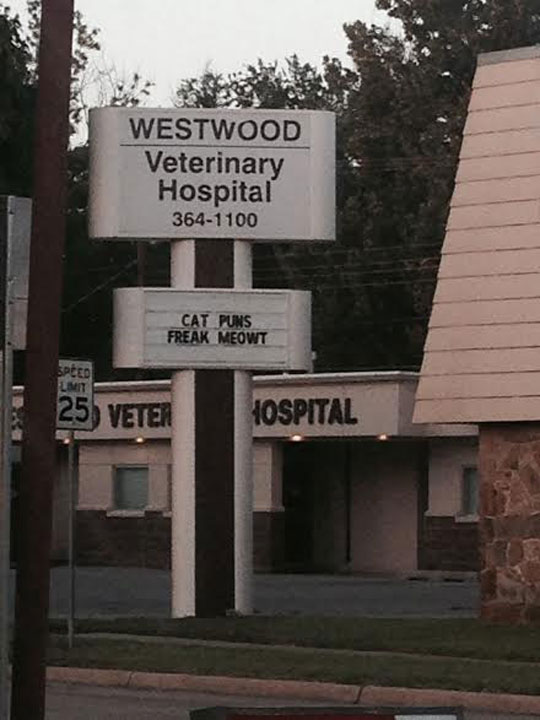 Veterinarian Humor