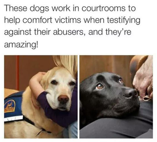cute-dogs-court-help