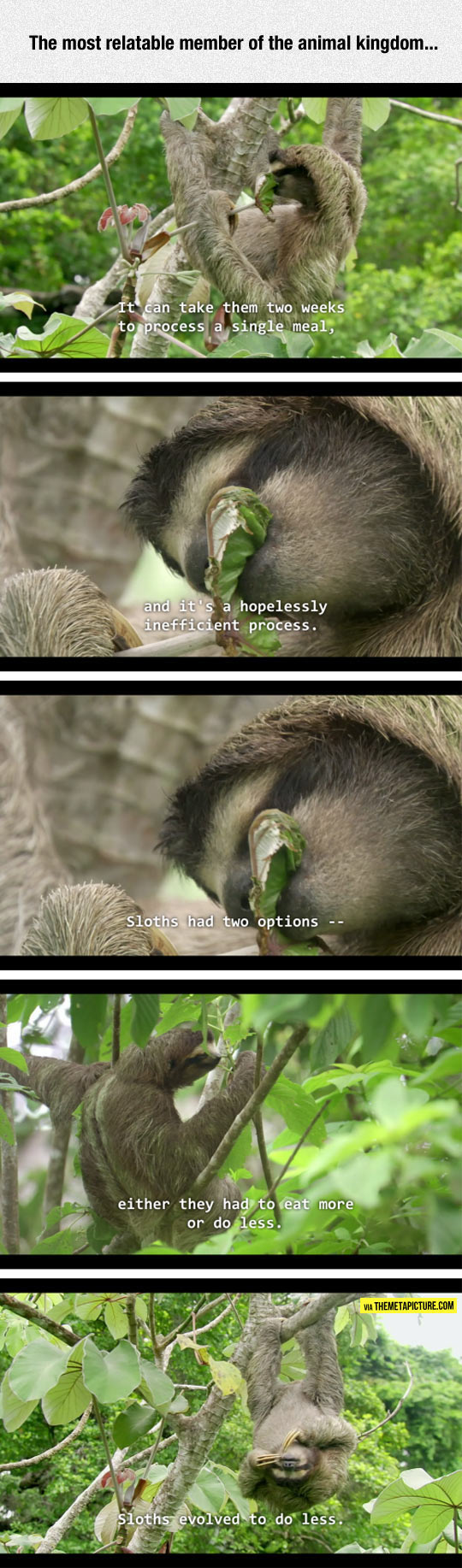 funny-sloth-tree-nature