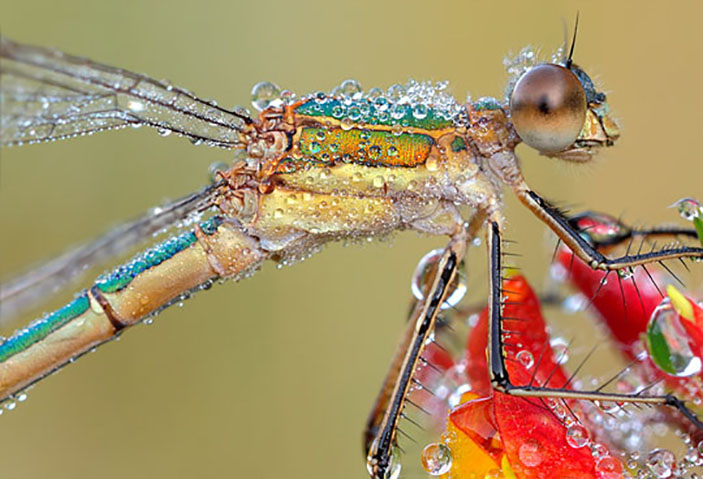 A Dragonfly after the rain