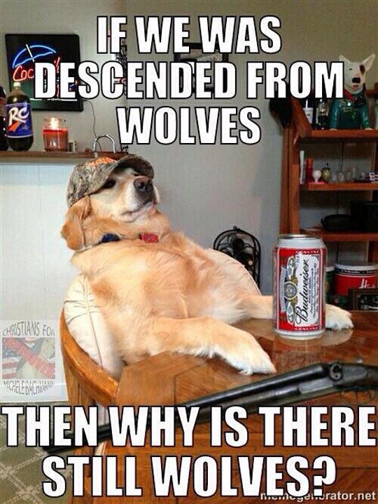 Explain This, Evolutionists