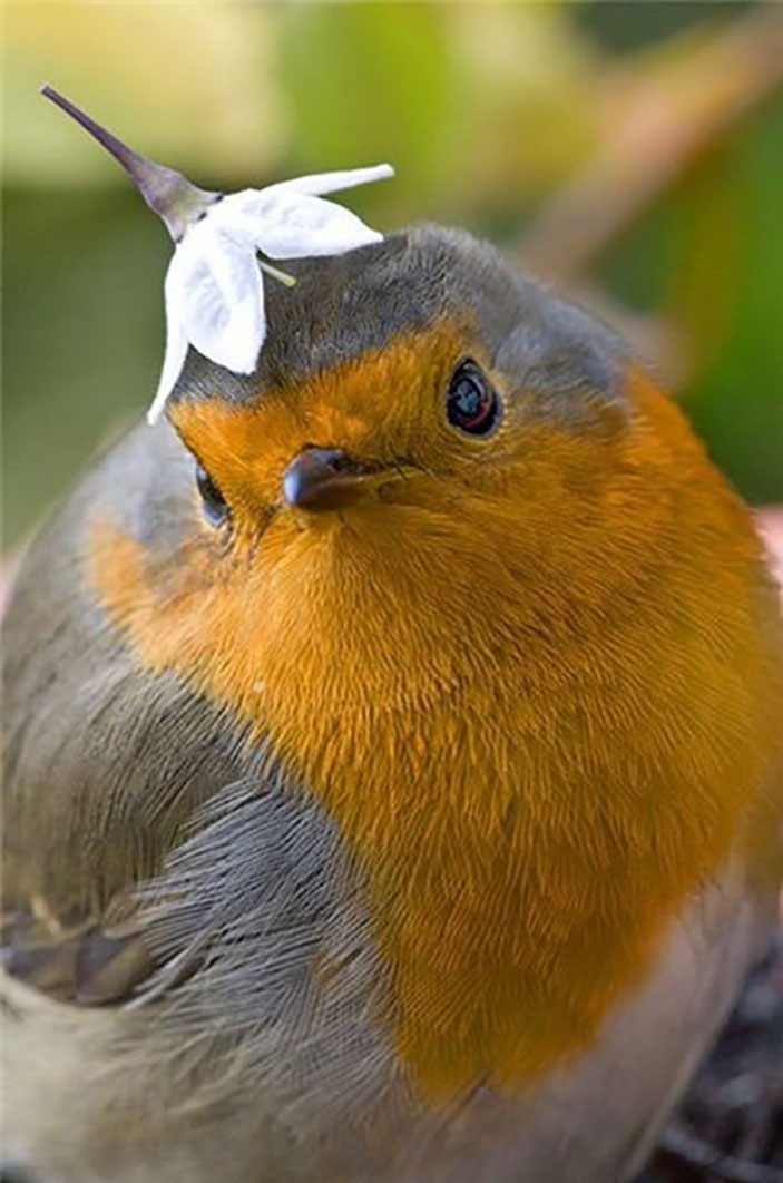 Silly bird, that is not a hat. You're not even a person.