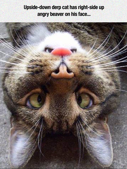 cool-cat-bunny-face-upside-down