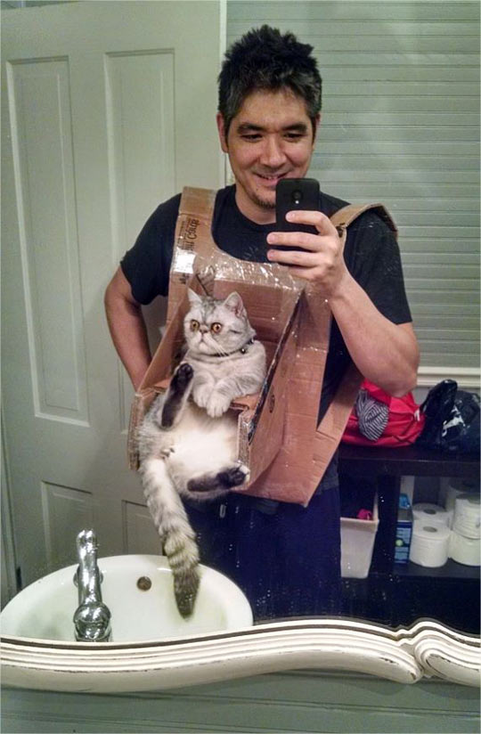 cool-cat-chest-harness-selfie-phone