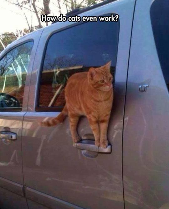 cool-cat-door-balance-car