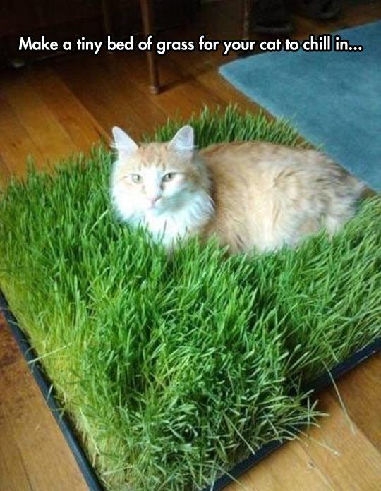 cool-cat-grass-bed-home-inside