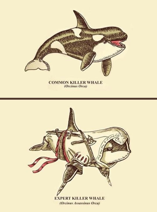cool-common-killer-whale-Assassins-Creed