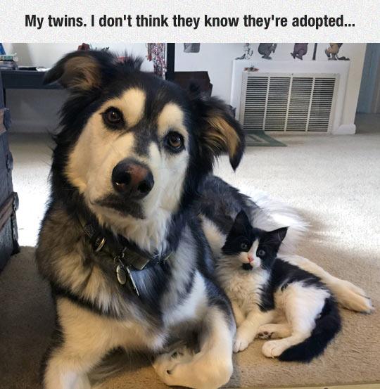 cool-dog-cat-black-white-twins