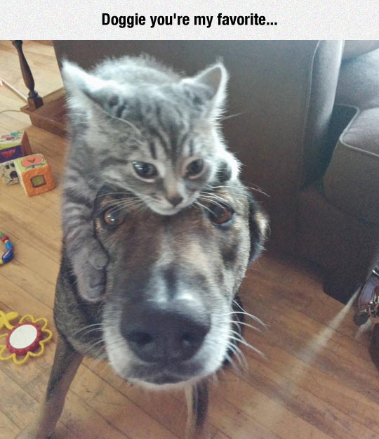 cool-dog-cat-head-hug-staring