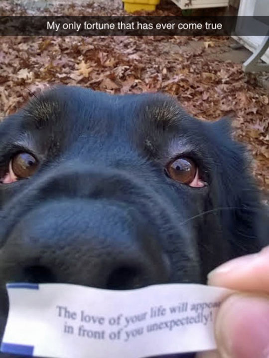 cool-dog-fortune-cookie-eyes