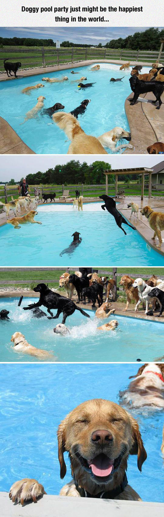 cool-dog-pool-party-jump-water