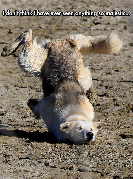 cool-dog-tripping-ground-landing