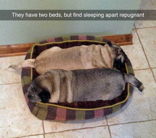cool-dogs-sleeping-together-bed