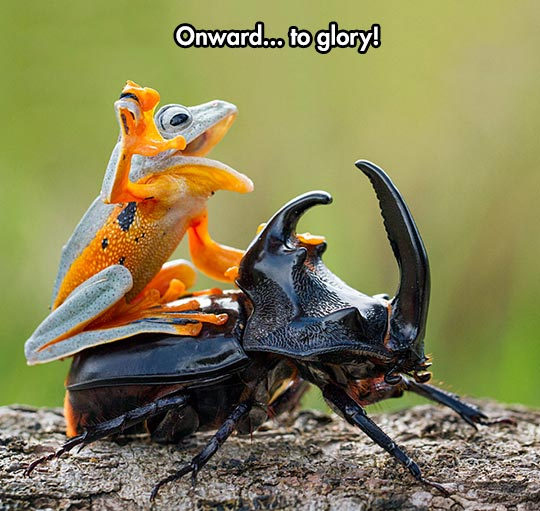 cool-frog-riding-beetle
