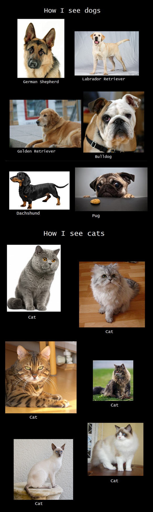 How I See Pets
