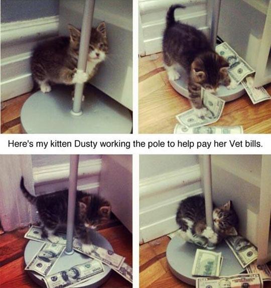 cool-kitten-Dusty-working-pole-money