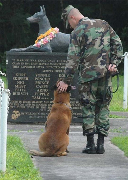 cool-marine-war-dog-memorial
